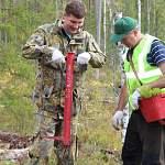 В Новгородской области чиновники, бизнесмены и прокуроры посадили сосновый лес