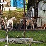 В Батецком женщина держит 25 собак и 15 кошек. Терпение соседей кончилось