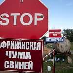В Новгородском районе выявлен ещё один очаг вируса африканской чумы свиней
