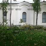 В Новгородском кремле из-за сильного ветра упало дерево