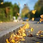 Первый день октября запомнится в Великом Новгороде сильным ветром