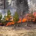 В Новгородской области количество палов сухой травы увеличивается в арифметической прогрессии