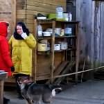 Зоозащитники просят помощи у новгородцев в снабжении кормом бездомных животных