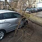 Фотофакт: по Новгородской области прошлась буря