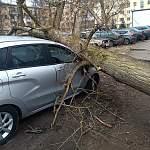 Днём в Новгородской области ожидается штормовой ветер