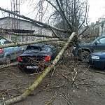 Осторожно! Крепкий ветер на подходе к Новгородской области!