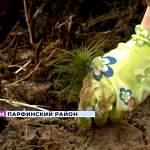 В Парфинском районе вырастет целый лес в память о погибших в годы Великой Отечественной войны