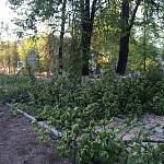 Фотофакт: в Боровичах спилили деревья и уничтожили гнездовье грачей