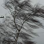 На юг Новгородской области скоро снова придёт очень крепкий ветер