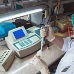В Новгородской области зарегистрированы 63 новых случая заражения коронавирусом