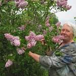Елена Лебедева выращивает сирени редких сортов и собирается украсить ими Хвойнинский район: фото
