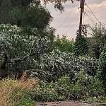 Сильный ветер повредил линии электропередач в Парфине. Жители жалуются на отсутствие света