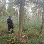 В Новгородском районе нашли мужчину, который бродил по лесу пять дней и четыре ночи