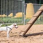 В Великом Новгороде появится первая площадка для выгула и дрессировки собак