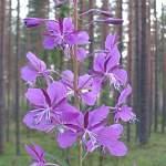 Вчера в лесах Новгородской области заблудились 10 человек