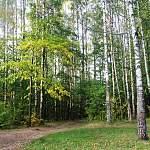 Создается общественный совет по развитию парка в Деревяницком микрорайоне