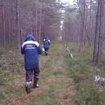 В новгородском лесу всю ночь продолжались поиски женщины