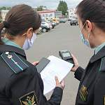 За год в Новгородской области судебные приставы разыскали 223 алиментщика